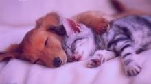 Como lidar com a morte de um animal de estimação