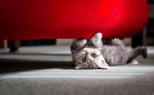 Como fazer seu gatinho parar de arranhar móveis