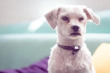 8 coisas que os cachorros odeiam nos humanos