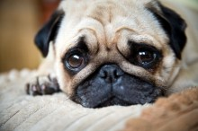 10 principais sinais de que seu cão pode estar doente