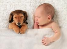 8 benefícios de ter animais de estimação na infância