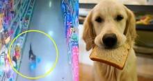 Ladrão mais FOFO do mundo: Cachorrinho entra em mercado e furta saco de pão e vira sucesso na internet