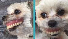 Homem ao acordar leva susto de seu cão de sorriso estranho