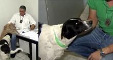 Cachorrinhos abandonados são adotados por policiais e viram xodó da delegacia <3