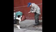 Simples gesto de idoso oferecendo água para cão sedento está comovendo o mundo inteiro (VEJA O VÍDEO)