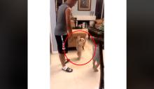 Cachorrinho espera sua vez para ser jogado no ar (VEJA O VÍDEO)