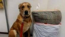 Cão é deixado em abrigo com sua cama e todos os seus brinquedos