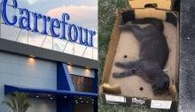 Justiça determina que Carrefour não extermine gatos na Barra da Tijuca