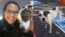 Após dono ser preso, cadela vira mascote da PM no Rio