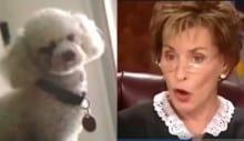 Juíza determina que cão escolha qual é seu verdadeiro dono (VEJA O VÍDEO)
