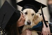Cão é homenageado em Universidade por acompanhar aluna cadeirante