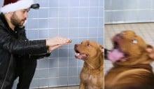 Mágico faz show para cães - e suas reações são surpreendentes