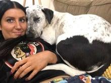 Cachorra rejeitada 2 vezes em abrigo não acredita que agora finalmente tem uma mãe
