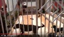 Prefeitura de Maringá resgata 10 cães com suspeita de abandono após dona viajar em feriado