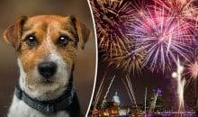 10 dicas para seu cão ficar mais calmo no Ano Novo