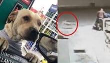 Cão de rua adotado por posto de gasolina salva frentista de assalto (VEJA O VÍDEO)