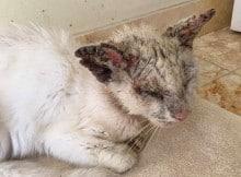 Gato 'cego' tem os olhos mais bonitos quando os abre