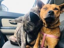 Cães confortam um ao outro após serem abandonados por família