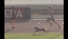 Cachorro invade corrida e chega em primeiro lugar (VEJA O VÍDEO)