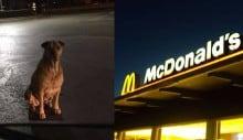 Cão finge ser abandonado para ganhar comida no McDonald's
