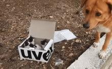 Cão encontra caixa com filhotinhos de gato e se torna o melhor pai adotivo deles