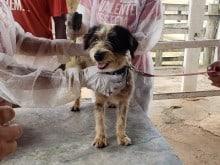 Animais em Brumadinho são tratados e levados para fazenda