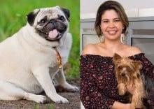 Obesidade em pets: estilo de vida, perigos e cuidados - saiba mais