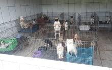 PM Ambiental fecha canil com 1.500 cães sob maus-tratos em SP