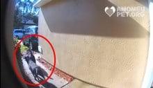 Cães correm chamar vizinho para socorrer sua dona tendo AVC (veja o vídeo)