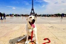 """Governo francês não reconhece pets como """"objetos"""", mas sim como seres vivos com sentimentos"""