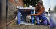 Mulher cria casinhas para animais de rua com caixinhas de leite