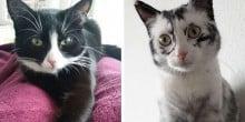 Gato com condições raras muda de cor na frente dos olhos de seu dono