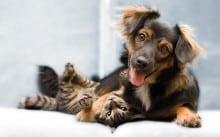 Cães e gatos: dicas básicas para quem decide ter um