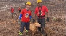 Cães heróis de Brumadinho são recebidos com tapete vermelho e homenagens no DF