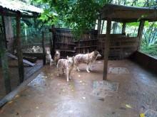 Cerca de 220 cães são resgatados de canil precário no RS