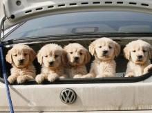 Nova lei prevê multa de até R$ 684 para quem atropelar cães
