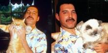 20 fotos que mostram como Freddie Mercury amava seus gatos como se fossem filhos