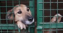 Projeto prevê Disque Denúncia para maus-tratos contra animais no Brasil
