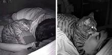 Rapaz instala câmera escondida no quarto para ver o que seu gato apronta enquanto ele dorme