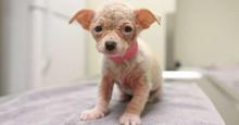 Cachorrinho pequenino sem qualquer pelo aparece em abrigo implorando por amor
