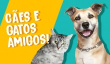 Como fazer cães e gatos viverem em harmonia?