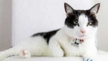 Gatos diferenciam seus próprios nomes de outras palavras, diz pesquisa