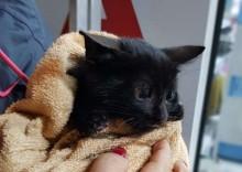 Comunidade salva vida de gato que caiu em boca de lobo em Passo Fundo (RS)