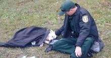 Policial se recusa a abandonar cachorro atingido por carro na Flórida (EUA)