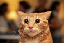 Estudo revela que gatos respondem ao som de seus próprios nomes