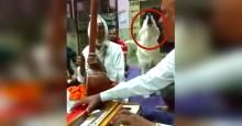 Dog ouve as pessoas cantando e decide se juntar a elas (veja o vídeo)