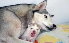 A importância de fazer o pré-natal nos pets