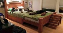 Casal constrói cama gigante para dormirem juntos com seus cães (veja fotos)