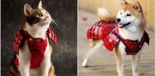 Pet Samurai! Marca japonesa lança coleção especial de armaduras sob medida para pets