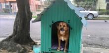 """Prefeitura de Porto Alegre vai """"despejar"""" cadelas por que casinhas atrapalham pedestres"""